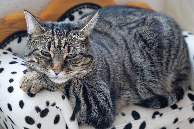 kočka na křesílku