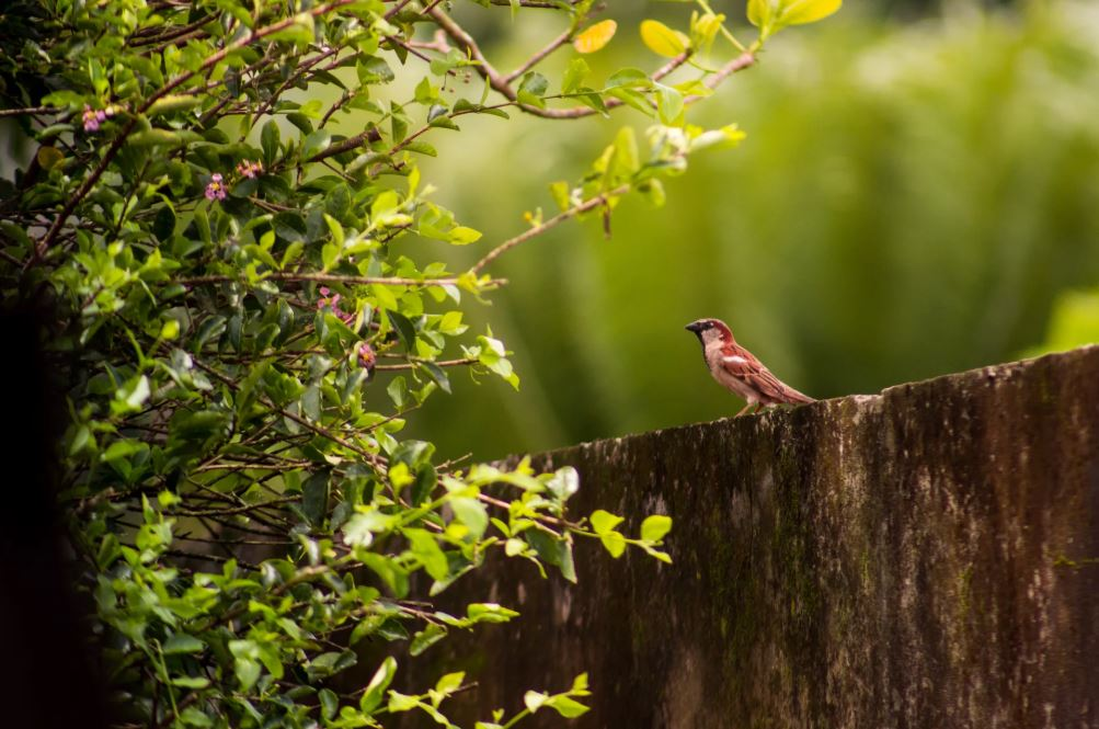 pták na zdi